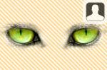 Animal Eyes Face in Hole