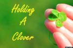 hand holding a clover shamrocks st patricks day