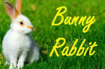 bunnyrabbit easter bunny rabbit