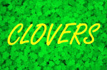 green clovers shamrocks st patricks day