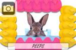 easter peeps pink yellow bunny rabbit