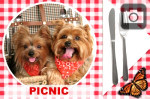 have a picnic with your photo