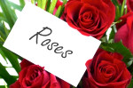 red roses romantic gift valentines day card greeting