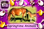 easter springtime animals sheep chickens bunny rabbits bunnies cows calves horses